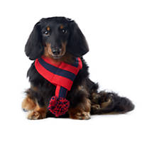 Pup Crew Red and Navy Stripe Pom Scarf