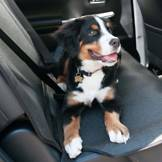 Dog Car Seat Covers Amp Protectors For Different Car Types