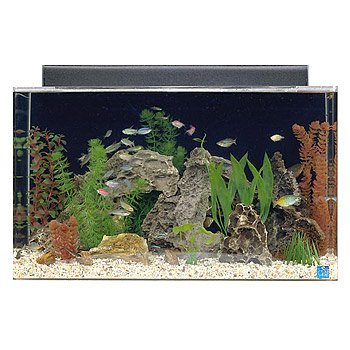 seaclear rectangular 29 gallon show aquarium combos in