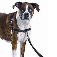 PetSafe Easy Walk Black Dog Harness