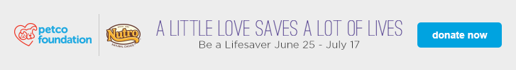 a little love saves a lot of lives - be a lifesaver - donate now
