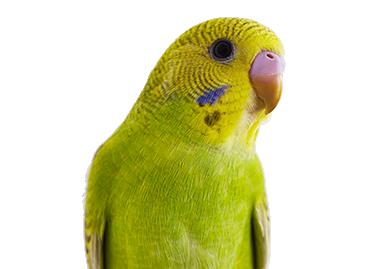 Pet Bird Amp Chicken Supplies Bird Store Petco