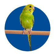 Parakeet Shop