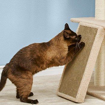 25% off Cat Furniture and Scratchers when you buy online and pick up in-store - Shop Now