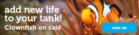add new life to your tanks! Clownfish on sale - view ad