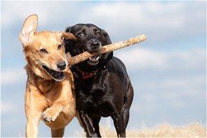 Pet Services Pet Sitting Full Insurance