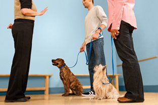 pet services dog training classes