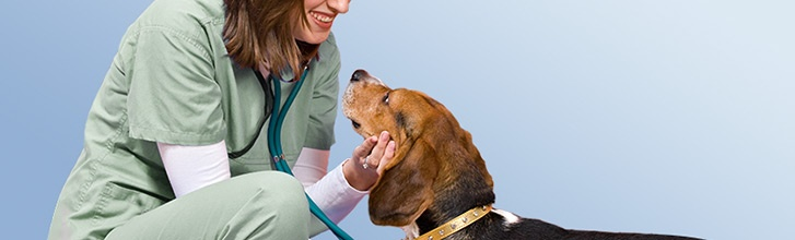 Pet Services Vaccination Clinics