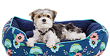 Up to 50% off - Dog Beds