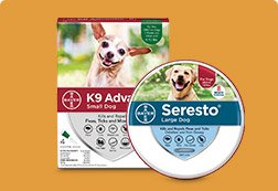 Up to 45% off Flea & Tick Solutions - Shop Now
