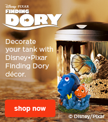 Decorate your fish tank with Disney-Pixar Finding Dory decor