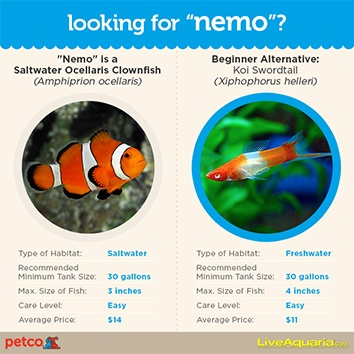 looking for nemo?