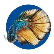 Betta Fish Shop