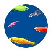Glo Fish Shop
