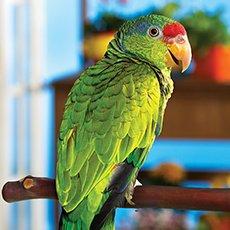 shop bird