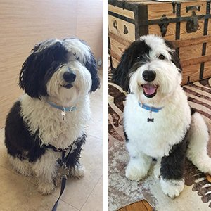 Grooming Results - Dog 14