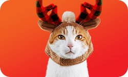Holiday Categories - Cat Apparel