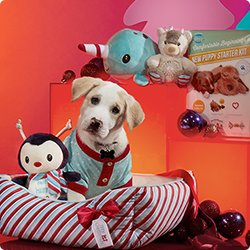 Gift Guide - Puppy's First Christmas