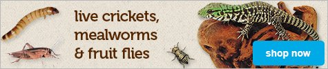 live crickets, mealworms, and fruitflies - shop now