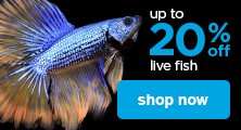 up to 25% off live fish - shop now