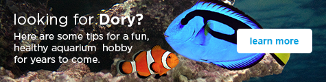 Looking for Dory? Here are some tips for a fun, healthy aquarium  hobby for years to come - learn more