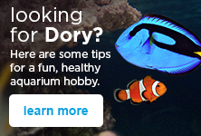 looking for Dory? Here are some tips for a fun, healthy aquarium hobby - learn more