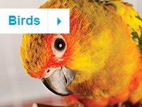 petco kids icon birds