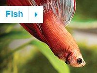 petco kids icon fish