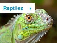petco kids icon reptiles