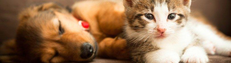 Dog & Cat - Health & Wellness