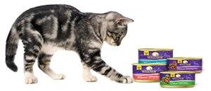 Wet Cat Recipe Cat Product