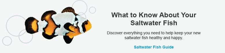 What to Know About Saltwater Fish - Learn More