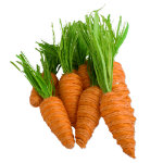 Easter Decorative Paper Carrot Set of 10