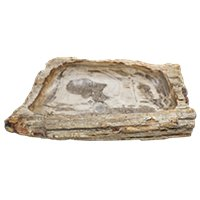 Java Petrified Root Sink Medium 6 x 26 x 14 in