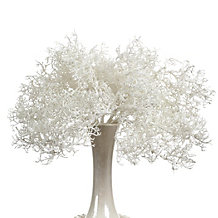 Coral Bush - Set of 3 - White