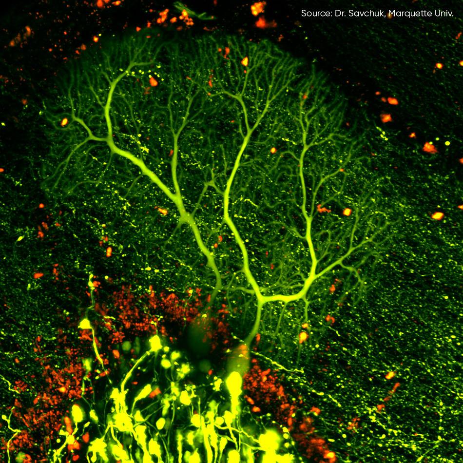 多光子激发显微镜(MPE)激光器