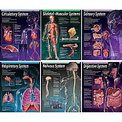 Creative Teaching Press Human Body Charts