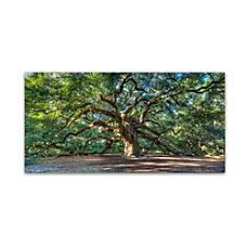 Trademark Global Angel Oak Charleston Gallery