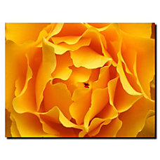 Trademark Global Hypnotic Yellow Rose Gallery
