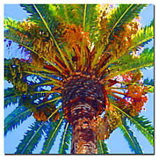 Trademark Global Palm Tree Looking Up