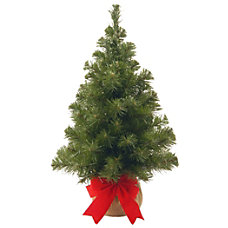 Noble Spruce Tree 2H x 16