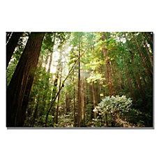 Trademark Global Muir Woods Gallery Wrapped