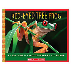 Scholastic Red Eyed Tree Frog