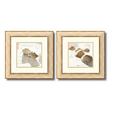 Amanti Art Postal Shells Framed Art