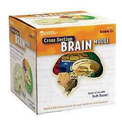 Learning Resources Human Brain Cross Section