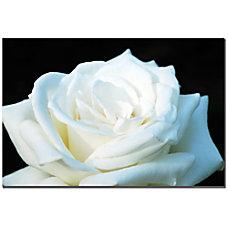 Trademark Global White Rose II Gallery