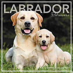 Landmark Labrador Retrievers Monthly Wall Calendar