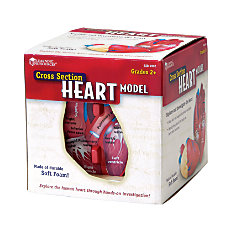 Learning Resources Human Heart Cross Section