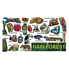 Scholastic Rainforest Plants Animals Mini Bulletin