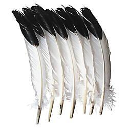Creativity Street Imitation Eagle Feathers 12